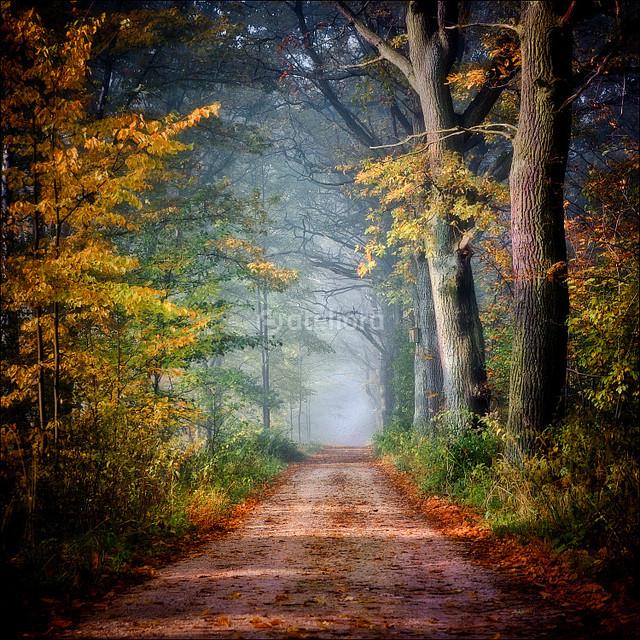 GrzegorzM ...kolory jesieni...