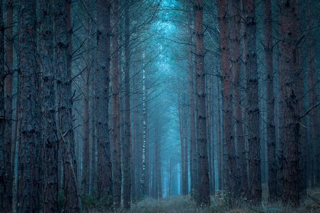 Forest Krzysztof Tollas #320963