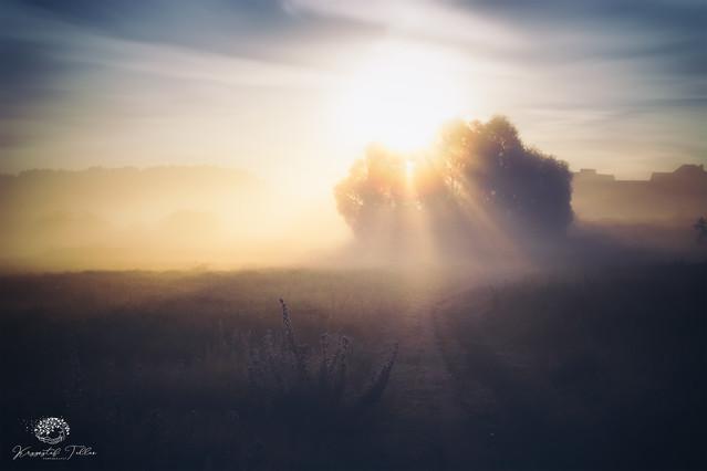Fog is Life Krzysztof Tollas #327127