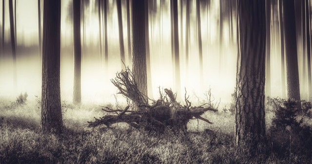 Forest Krzysztof Tollas #324117