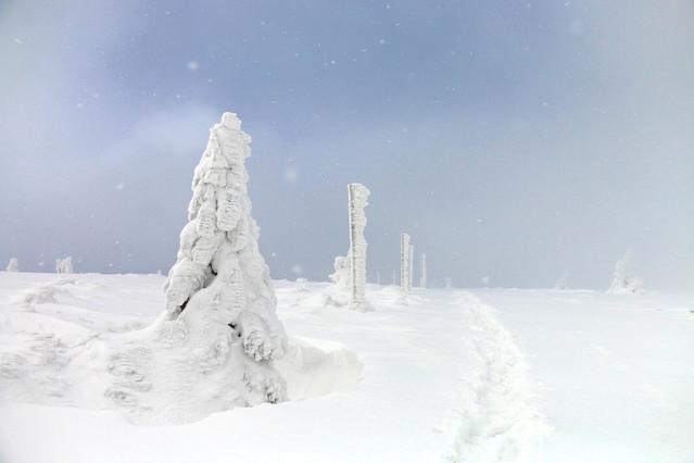 śnieżna baśń Sufka #312633