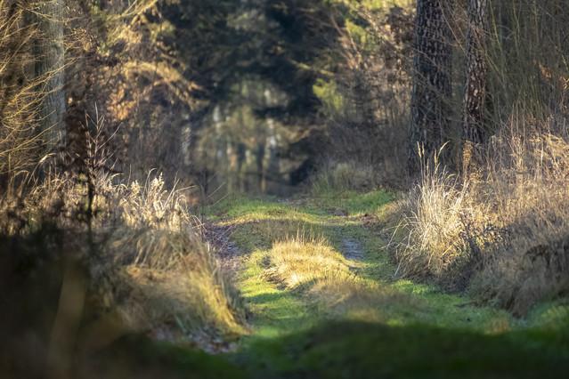 trakt leśny - okolice wsi Płoniawy darwojt #334907