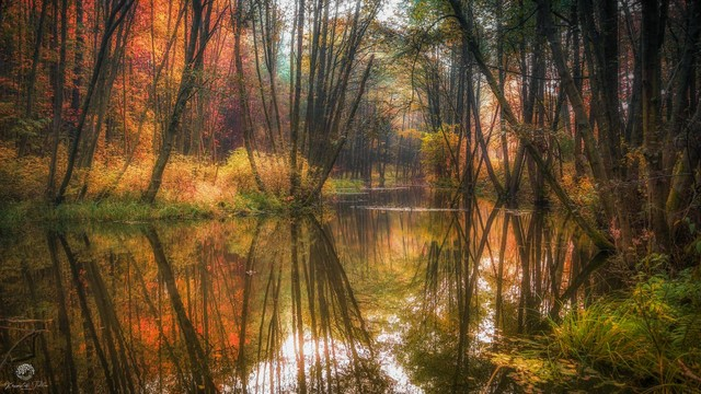Forest mirror reflection Krzysztof Tollas #326530