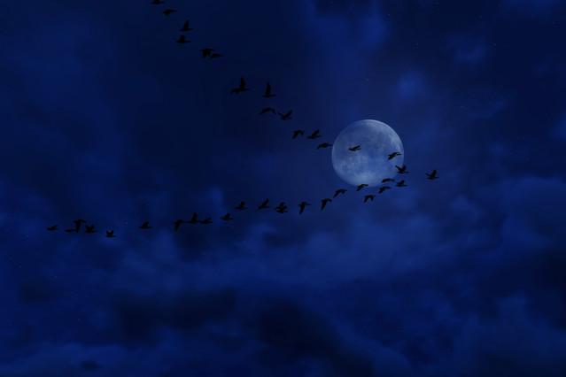 Nocny przelot Nocny przelot wicio #287211