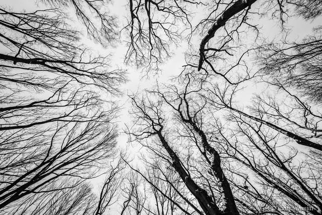 ''Słońca'' krzyknęły drzewa i wyciągnęły gałęzie ku niebu. Piotr