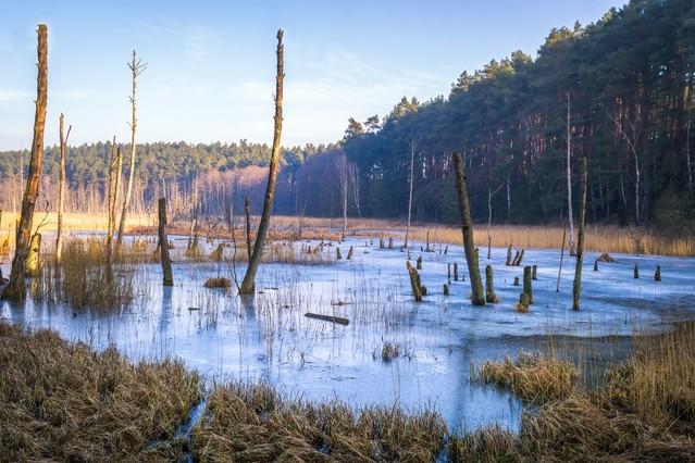 Rezerwat przyrody Kuźnik - Bagna Krzysztof Tollas #315081
