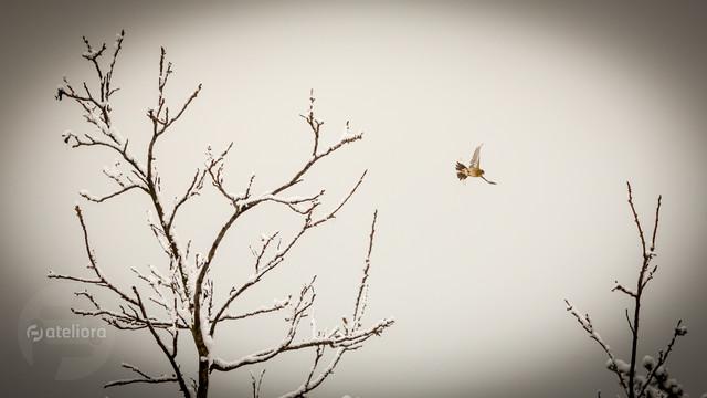 Ptasiek Piotr Schmidt #302478