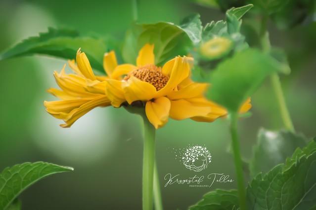 Kwiaty polne Krzysztof Tollas #325321