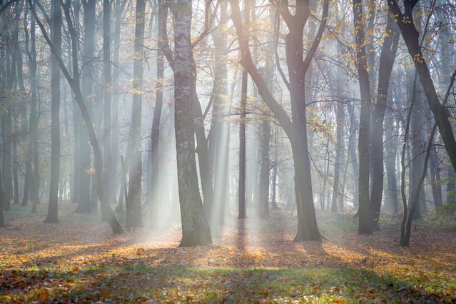 O pogańskiej porze w parku Wrocław, Park Zachodni Piotr Schmidt