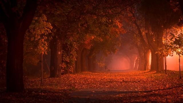 Autumn Alley Krzysztof Tollas #320397