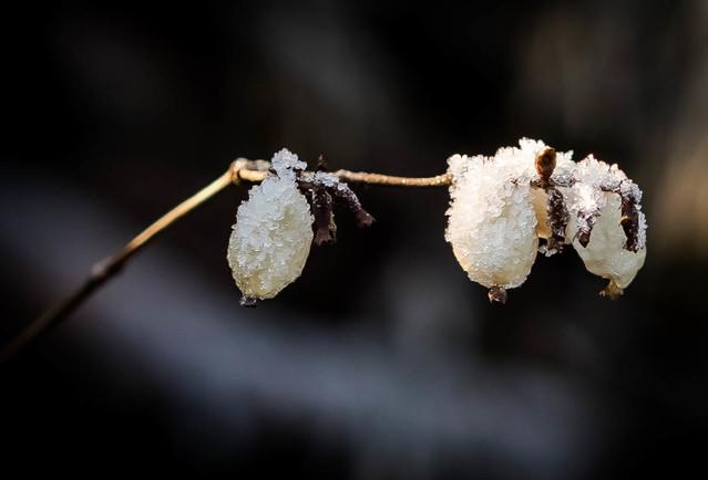 KOSTRZEWA_GRZEGORZ Zimą malowane