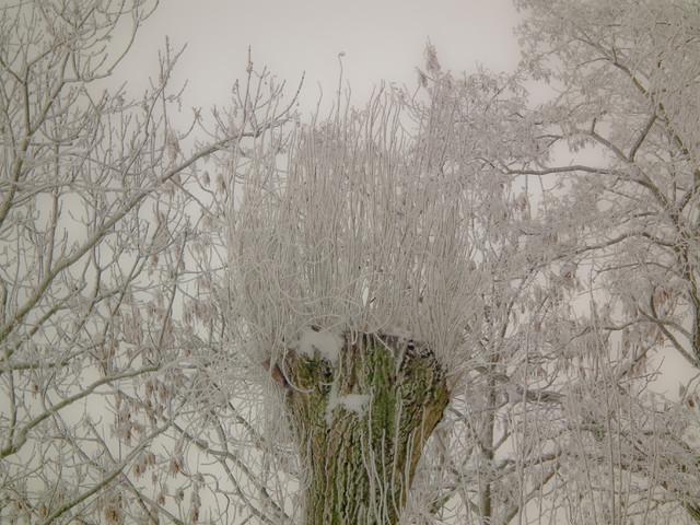 obia Uroki zimy