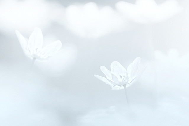 biało na wiosnę... Przemek Kijowski Fotograwhy #207926