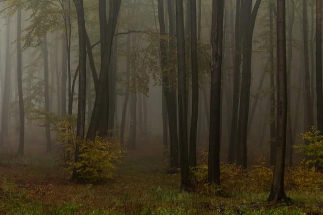 Mgła : Marcin STIEBAL #321917