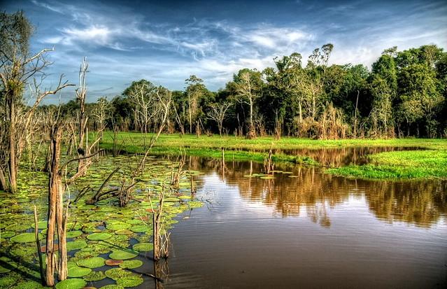 Powroty - Amazonia... Zbigniew Stanislawski #166652
