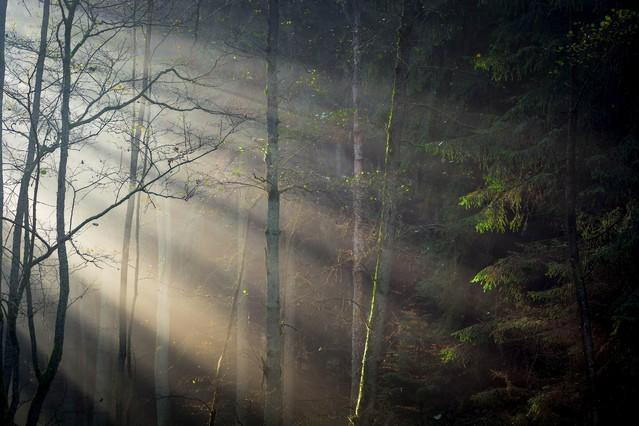 Przebijające Światło we mgle Krzysztof Tollas #311583