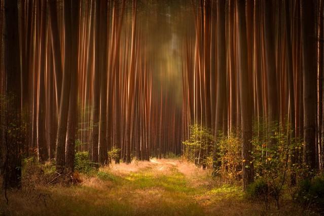 Leśna droga Krzysztof Tollas #319659