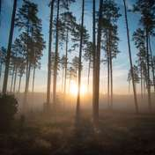 Krzysztof Tollas Las o wschodzie słońca