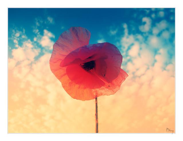 Mój kawałek nieba A może to tylko sen... PITERQ #164814