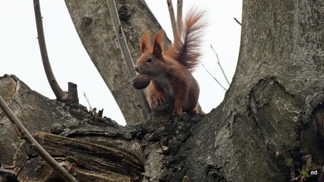Wiewiórka Picasa #305923