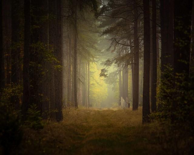 Tajemniczy las Krzysztof Tollas #320353