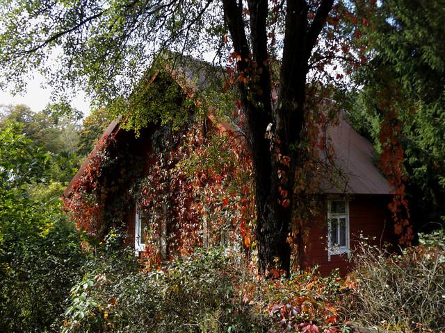 chatka na carskiej drodze w BPN darios #319630