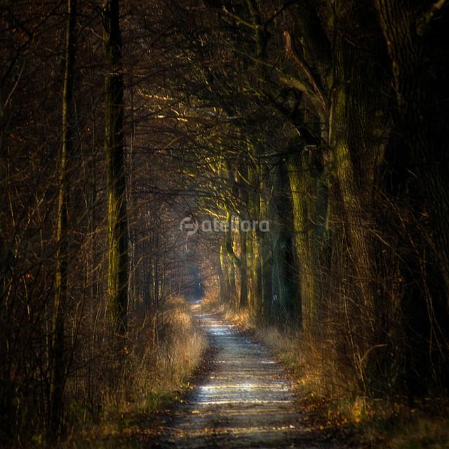 GrzegorzM ...jesienno zimowy las...