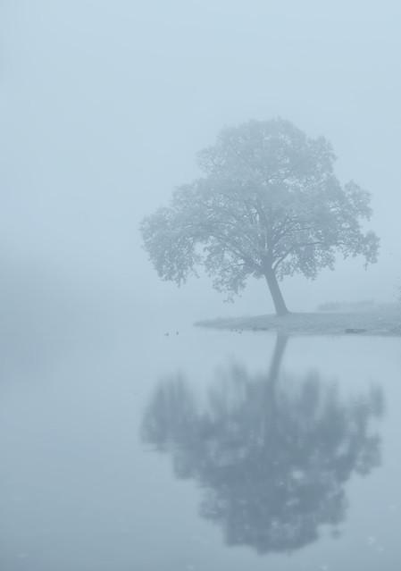 misty tree PRZEMEK KIJOWSKI -AUTOR #310965
