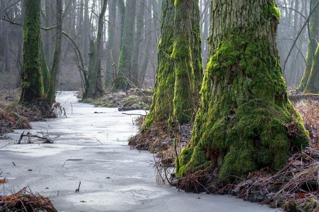 Mechate drzewa w lesie Krzysztof Tollas #314940