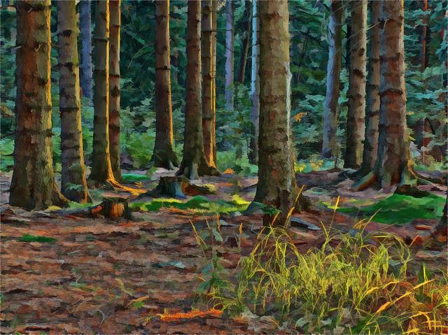 malowany las broonzy #330781