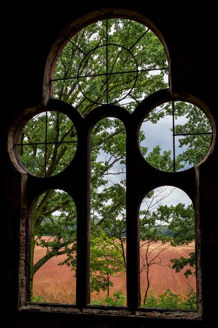 Framed trees Piotr Schmidt #310882
