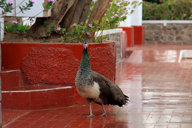 Hotel Majoro. Nazca. Peru. Piotr Schmidt #103600