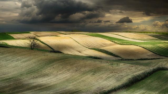 fields of light rpowroznik #266825
