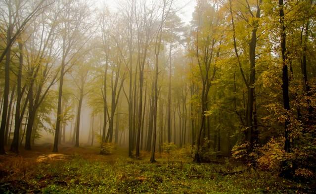 W moim magicznym lesie: Marcin STIEBAL #321197