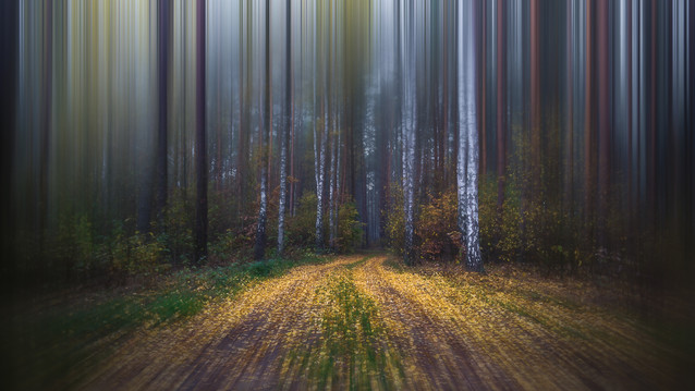 Blurry Forest Krzysztof Tollas #303325