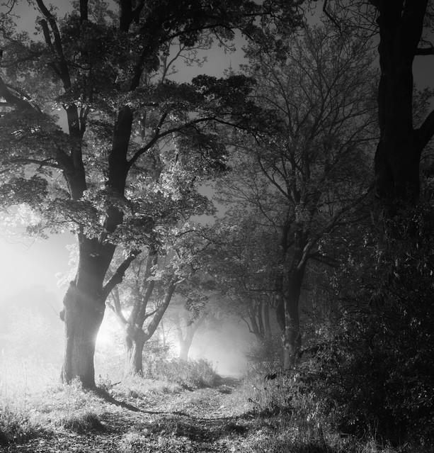 Piła - Dark Alley - B&W Krzysztof Tollas #310858