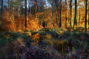 Sławek Rezerwa W jesiennym lesie #5