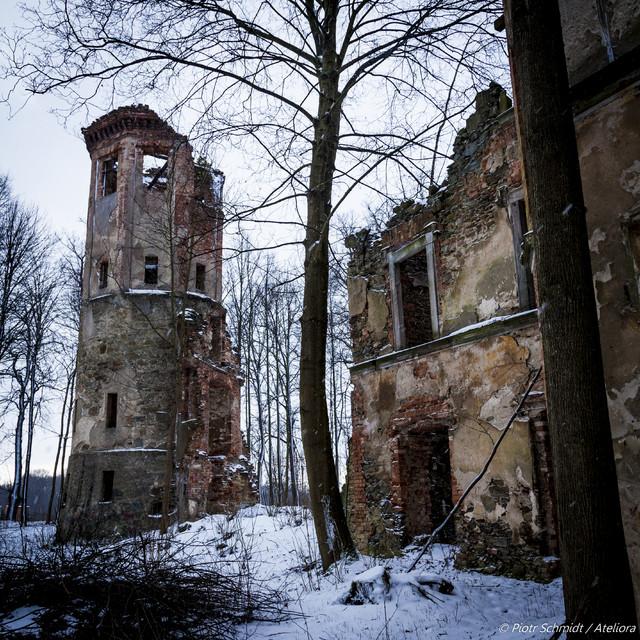 Ruiny pałacu w Uboczu. Drzewa wzięły go w swe posiadanie. Ruiny
