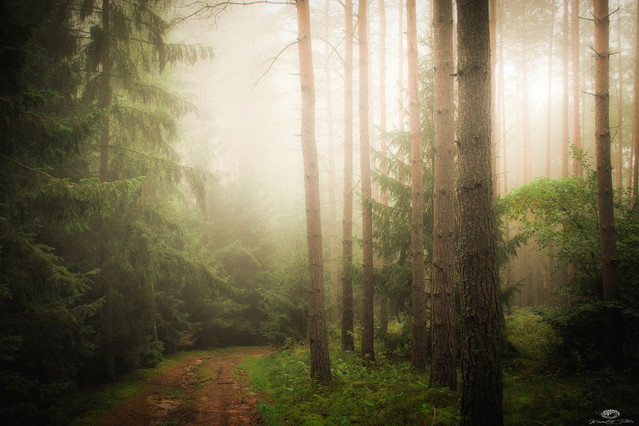 The path through the woods Krzysztof Tollas #328708