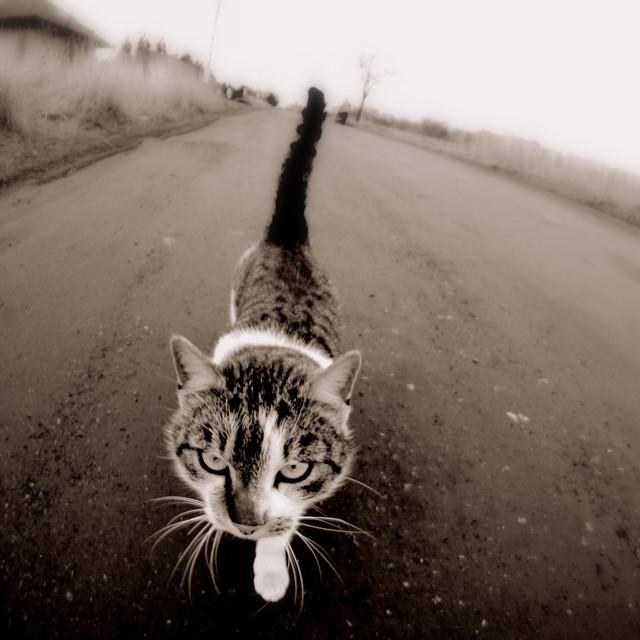 Picasa Winter walk a cat, photo Jolanta Dziuk
