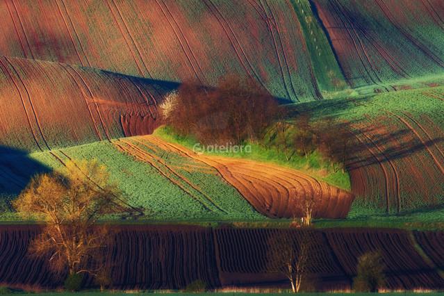 Morawskie pola. Grzegorz Moroń #323510