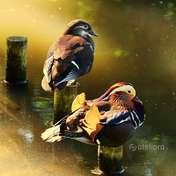 Picasa|Mandarynki w blasku słońca...