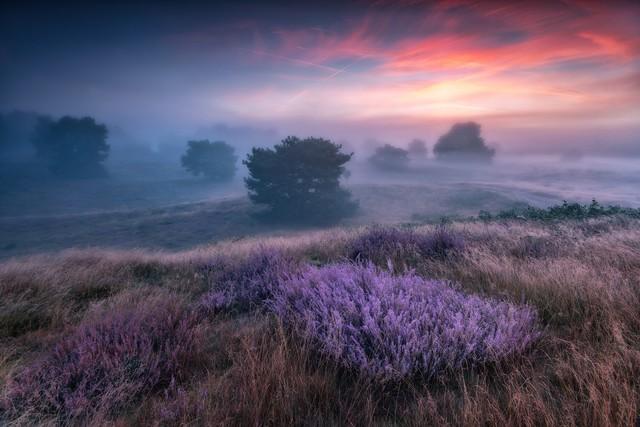 ''the colors of heather'' dawno mnie tu nie bylo, jakos nie umiem