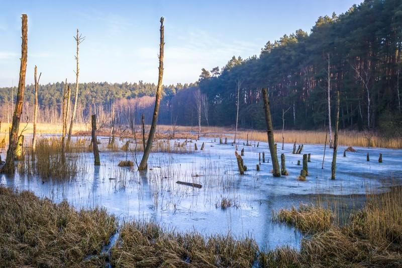 Krzysztof Tollas| Rezerwat przyrody Kuźnik - Bagna