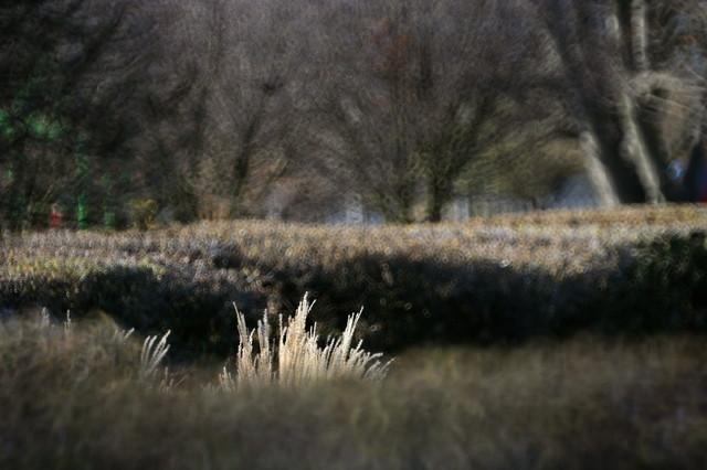 jesienią... przez park... Pole Mokotowskie... Anka Bujniewicz