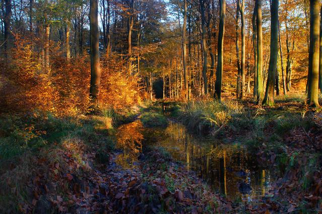 W jesiennym lesie #5 Sławek Rezerwa #327827