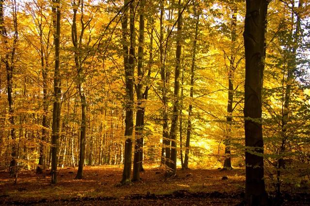 Jesienny las : Marcin STIEBAL #300205