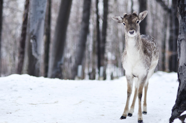 Bambi? polestokrotek #268390